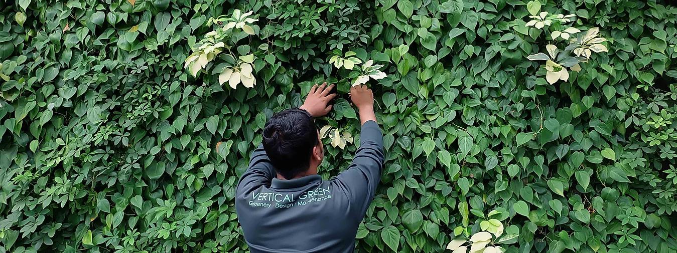 green wall maintenance team singapore